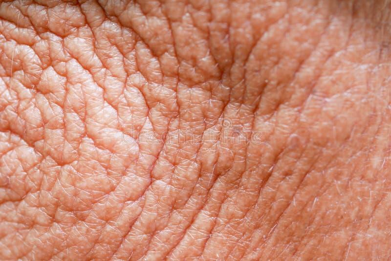 Абстрактная кожа старика текстуры предпосылки стоковая фотография