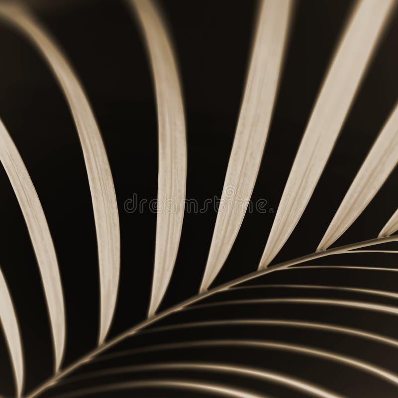 абстрактная ладонь листьев крупного плана стоковые изображения