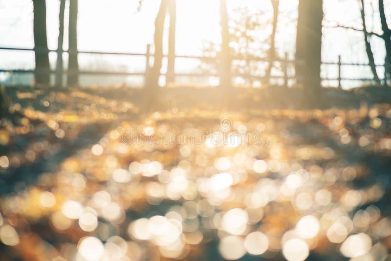 Абстрактная мягкая и несосредоточенная предпосылка дизайна с космосом экземпляра для текста Волшебная предпосылка леса осени с не стоковое изображение rf