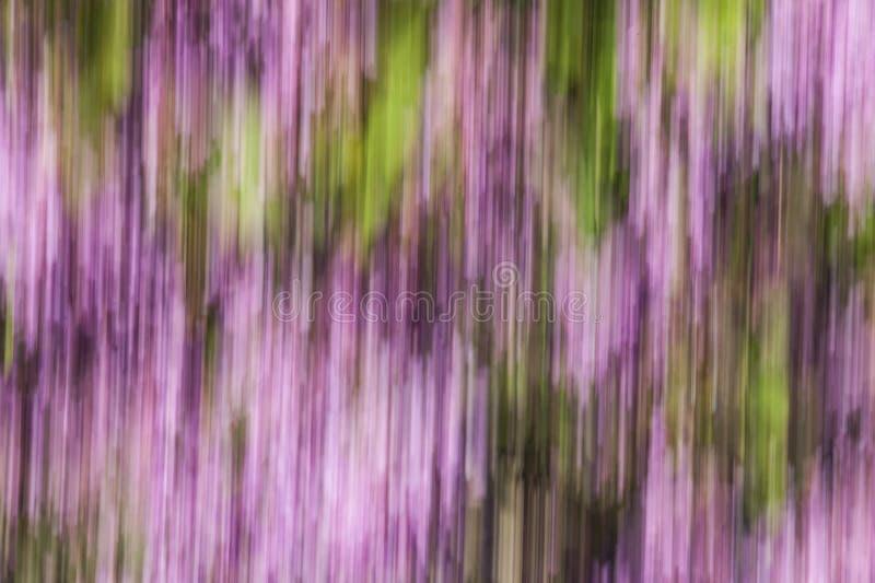 Абстрактная нерезкость движения цветков - долгая выдержка стоковая фотография rf