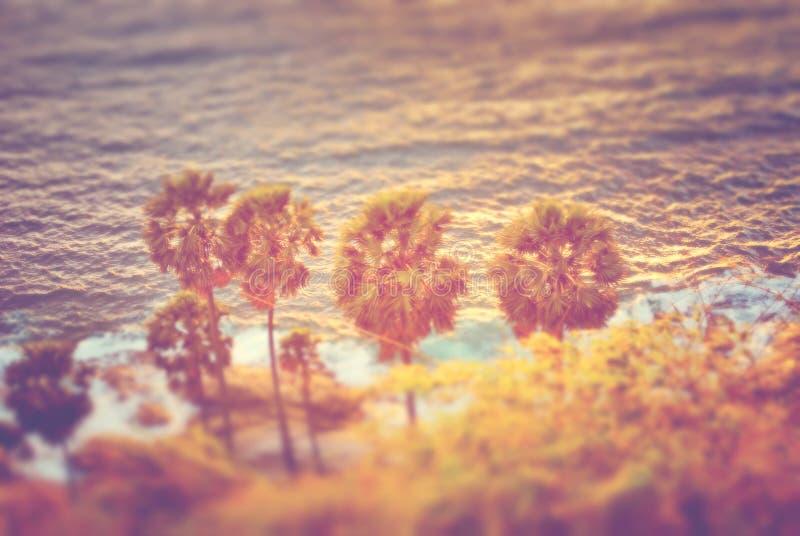 Абстрактная нерезкость пальмы в пляже захода солнца стоковая фотография