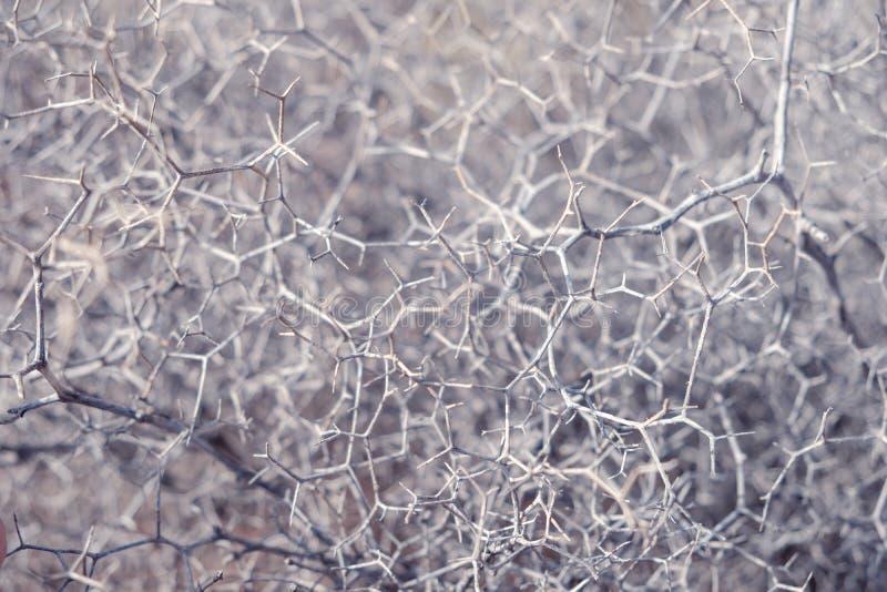 Абстрактная органическая картина, closep природы, концепция сети стоковые фотографии rf