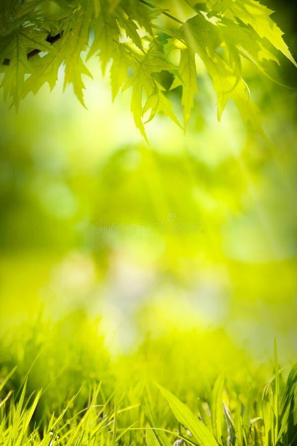 Абстрактная предпосылка зеленого цвета природы весны стоковые фотографии rf