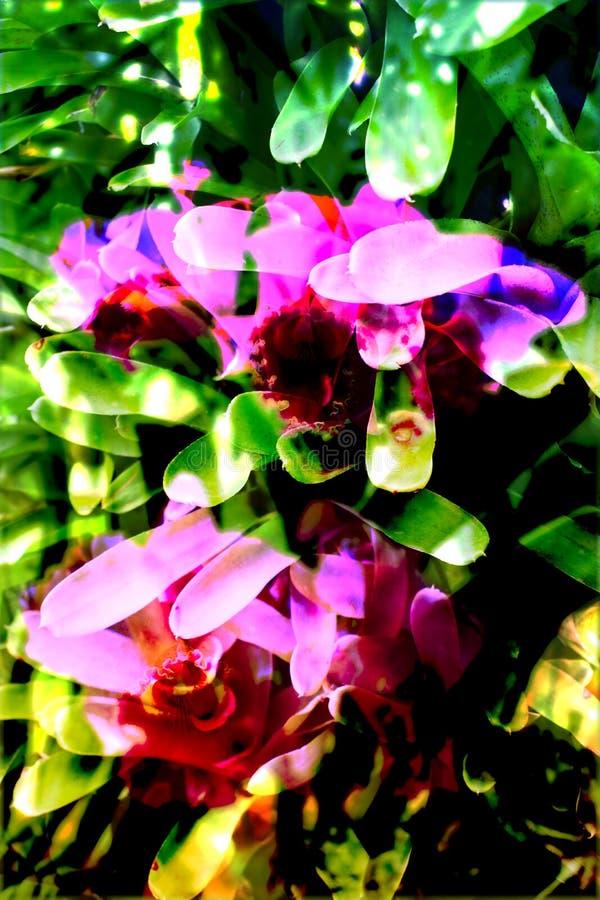 Абстрактная предпосылка листвы стоковые фотографии rf