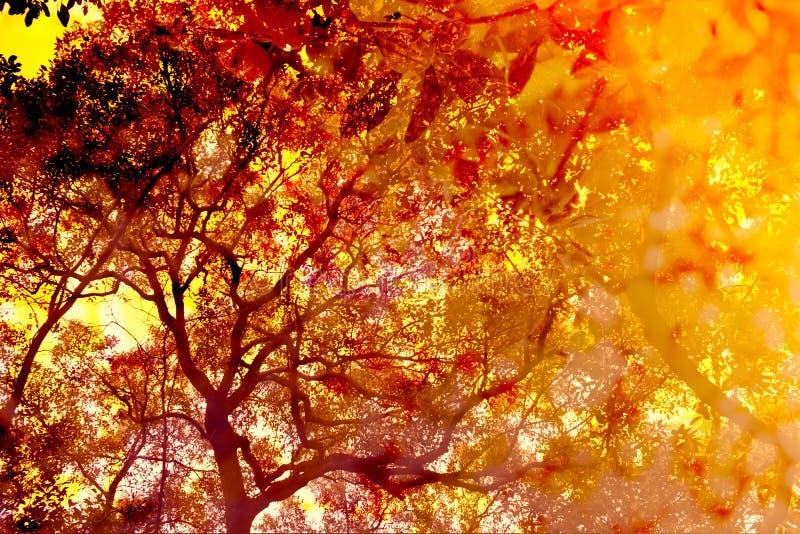 Абстрактная предпосылка листвы стоковое изображение rf