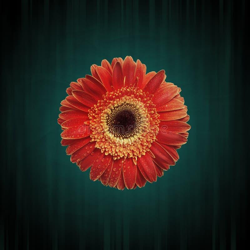 Абстрактная предпосылка цветка grunge стоковое изображение rf