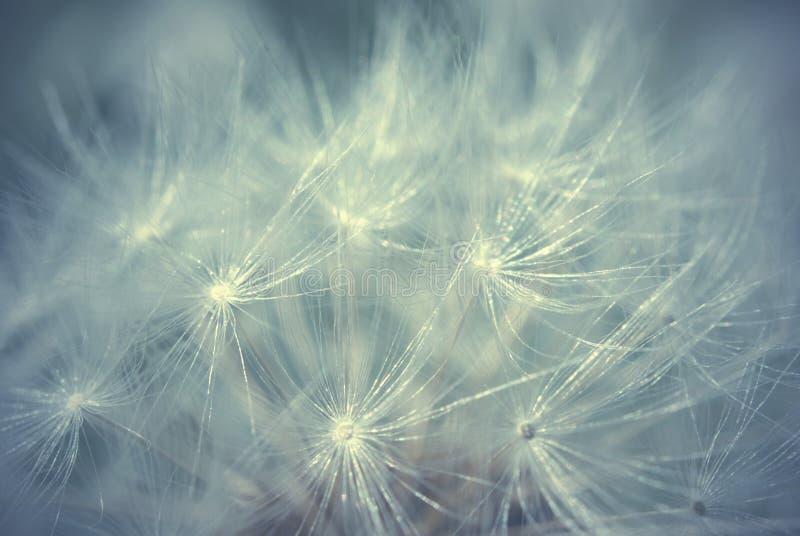 абстрактная предпосылка начинает макрос цветка нити много тонкая сеть стоковая фотография