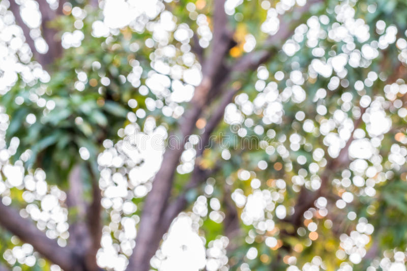 Абстрактная природа, зеленое bokeh дерева стоковые изображения