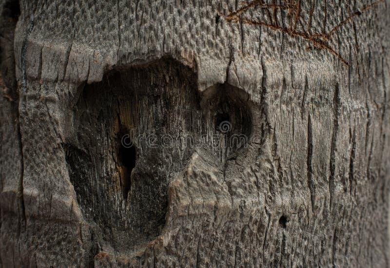 абстрактная древесина текстуры стоковые изображения rf