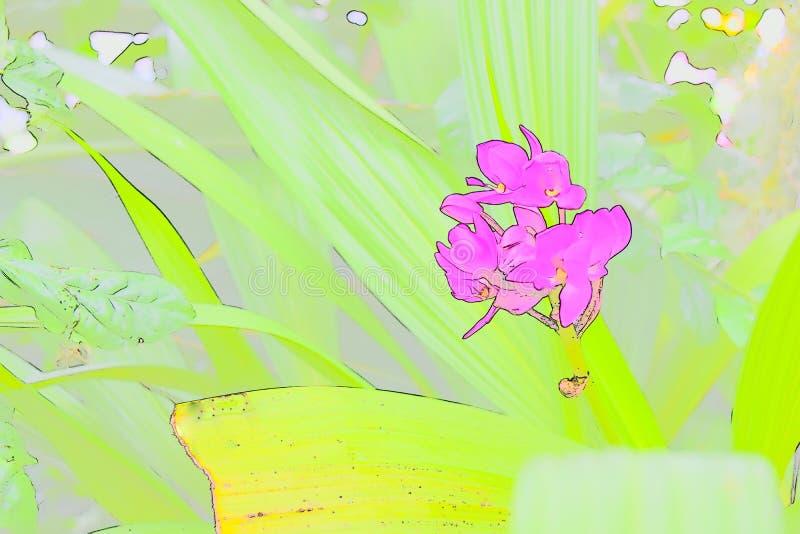 Абстрактная розовая орхидея стоковая фотография rf