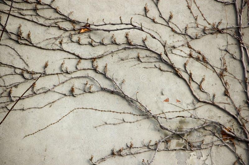 абстрактная текстурированная декоративная предпосылок стоковые изображения rf