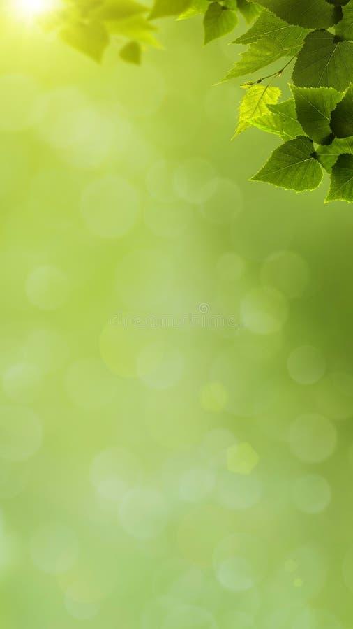 Абстрактное естественное знамя стоковое фото rf
