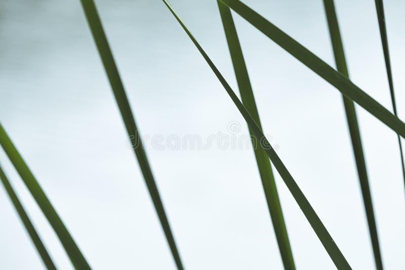 Абстрактное естественное фото с зеленой травой стоковые изображения rf