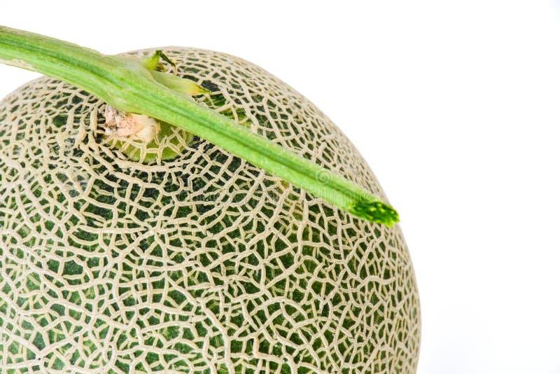 Абстрактное закрытие свежей дыни или канталупа большой зеленый изолированный на белом фоне стоковая фотография