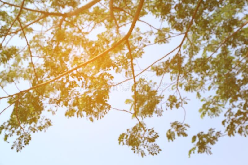 Абстрактное изображение весны Зеленая естественная предпосылка из ветви дерева фокуса стоковое изображение