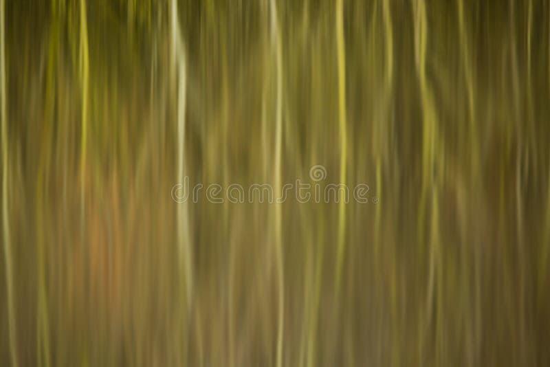 Абстрактное отражение камышовых кроватей и деревьев в неподвижной воде стоковое фото