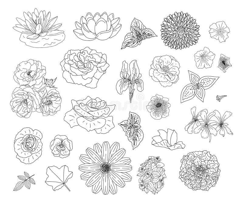 Абстрактное собрание с цветками в стиле doodle для книжка-раскраски и дизайна украшения, свадьбы, поздравительной открытки Страни иллюстрация штока