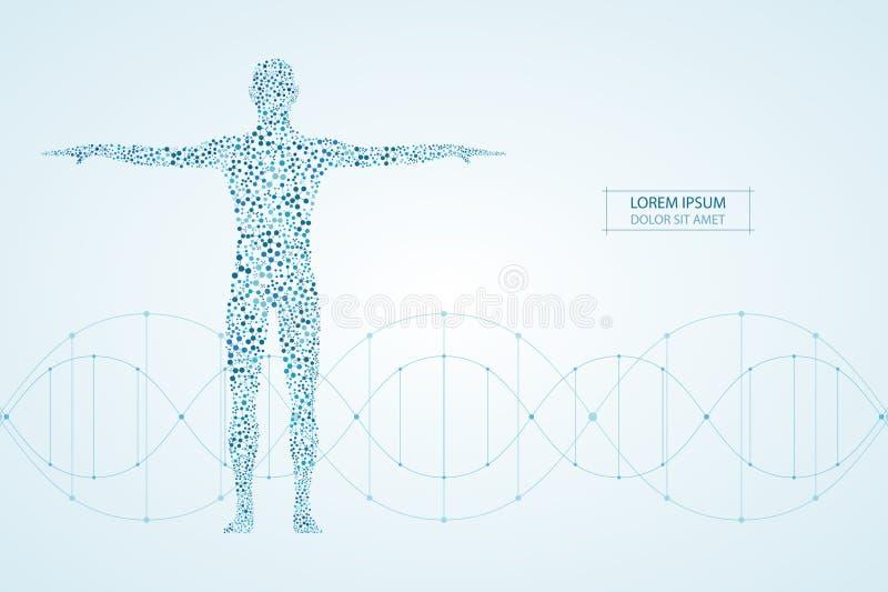 Абстрактное человеческое тело с дна молекул Медицина, концепция науки и техники также вектор иллюстрации притяжки corel