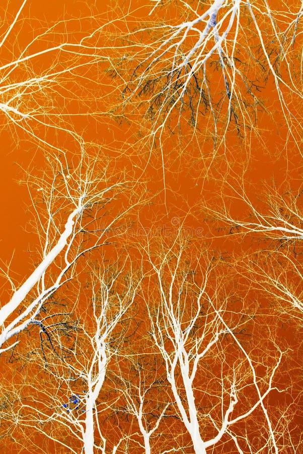 Абстрактные верхние части дерева осени стоковая фотография