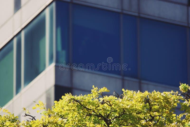 Абстрактные деревья перед офисным зданием окна стоковое фото rf