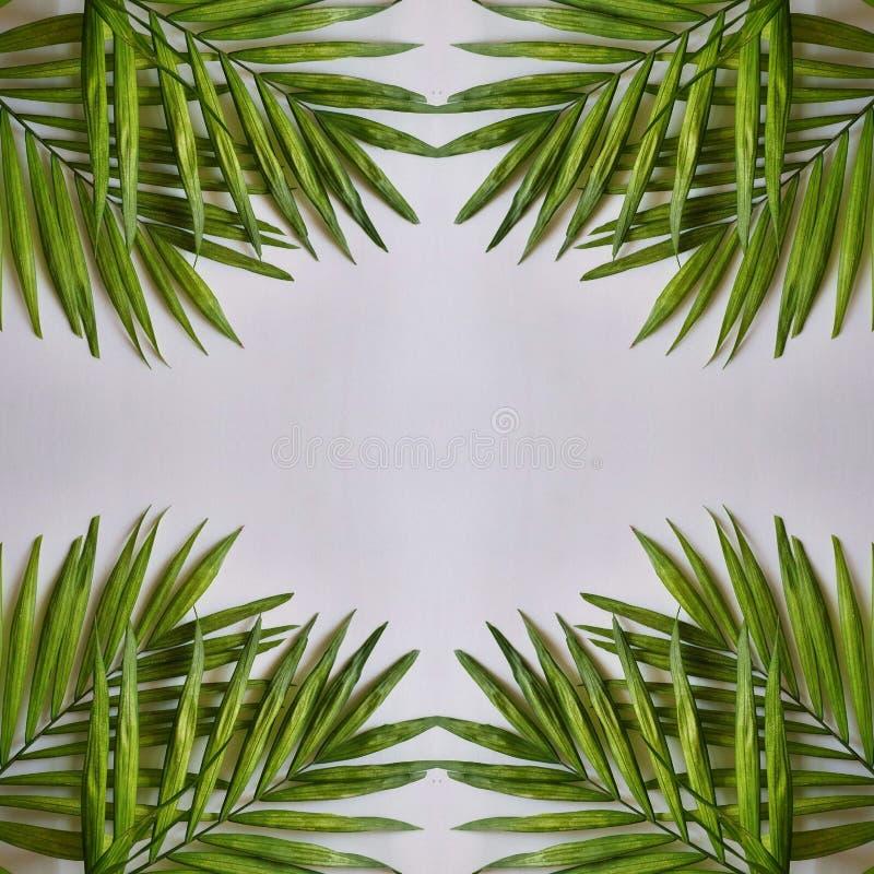 абстрактные дизайн с листьями завода ладони и светлый - серая предпосылка иллюстрация штока