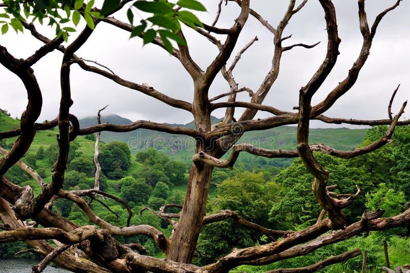 Абстрактные дерево и холмы стоковые изображения rf