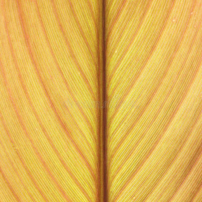 Абстрактные желтые лист выравнивают текстуру предпосылки стоковое изображение rf