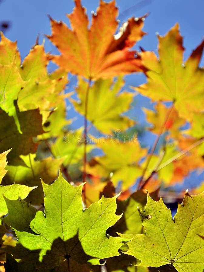 абстрактные листья предпосылки осени стоковое изображение