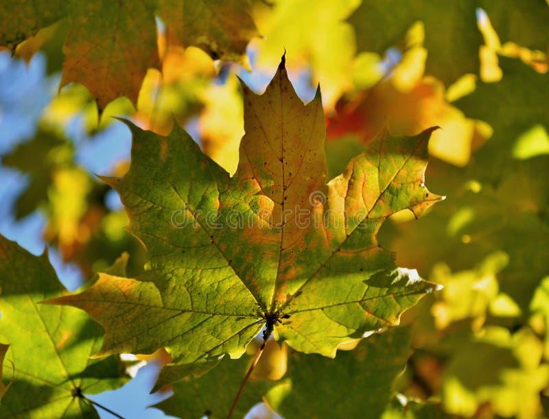 абстрактные листья предпосылки осени стоковая фотография