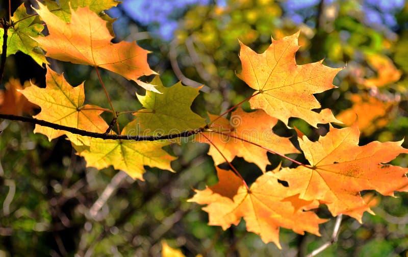 абстрактные листья предпосылки осени стоковые фотографии rf