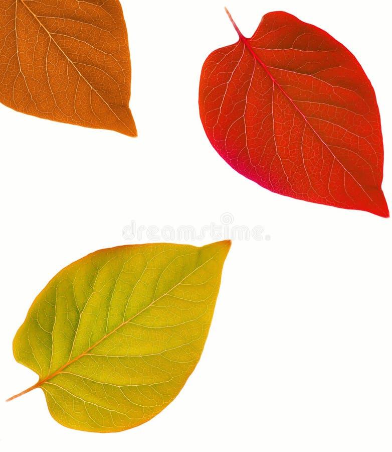 абстрактные листья рамки осени стоковое изображение rf