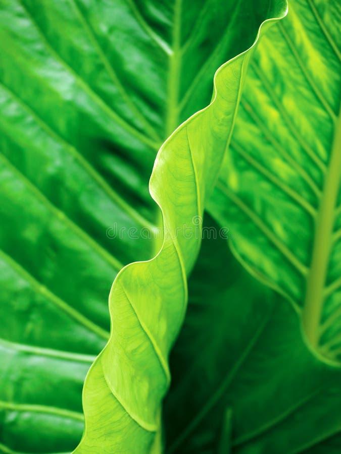 абстрактные листья тропические стоковая фотография