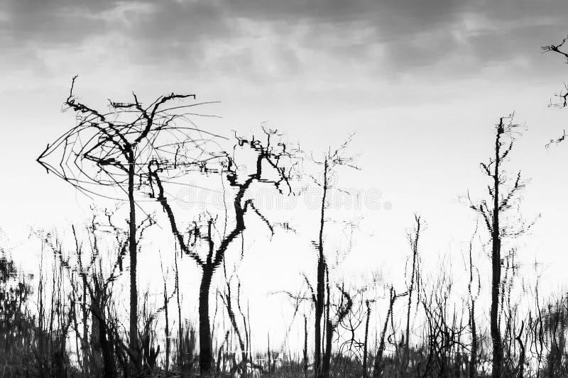 Абстрактные мертвые деревья отразили в озере, искусстве картины и поверхности, обнаженных стволах дерева и ветвях, нежно облаках  стоковое фото rf