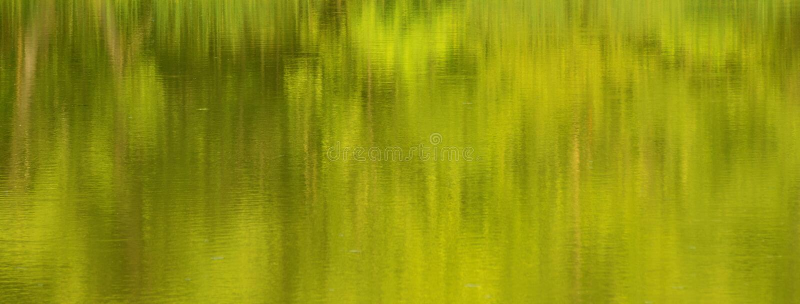 Абстрактные отражения воды Tress стоковое изображение rf