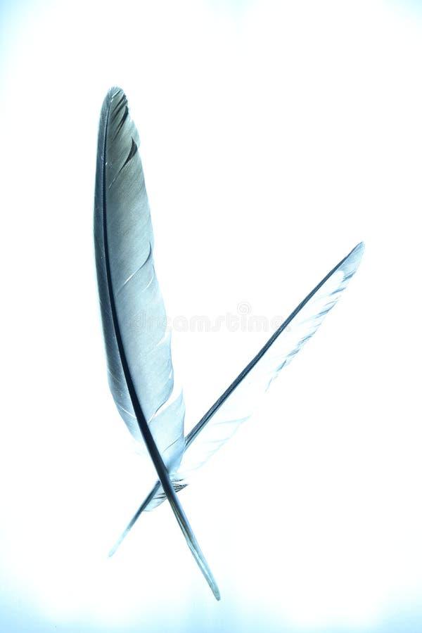 Абстрактные пер с голубой подкраской стоковое фото rf