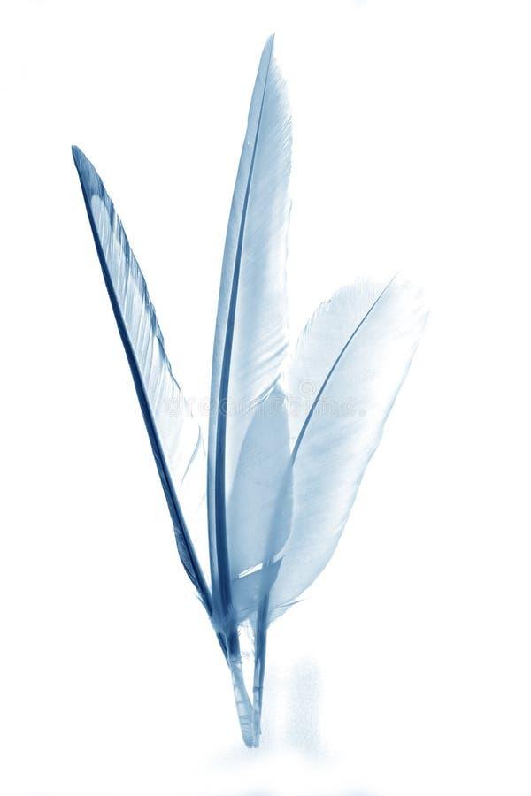 Абстрактные пер с голубой подкраской стоковые изображения