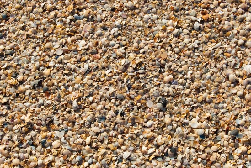 абстрактные раковины песка предпосылки стоковое фото rf