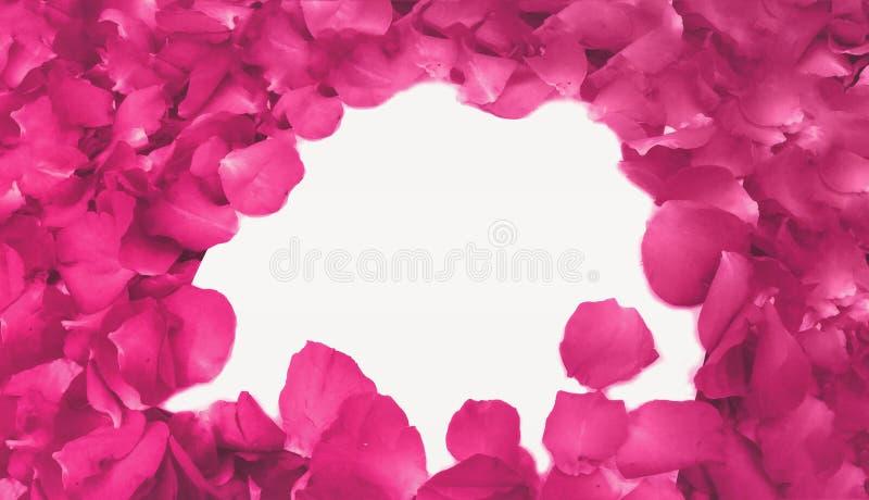 Абстрактные розовые лепестки розы по мере того как рамка использовала как шаблон с мягким предпосылкой фокуса фильтрованной цвето стоковая фотография