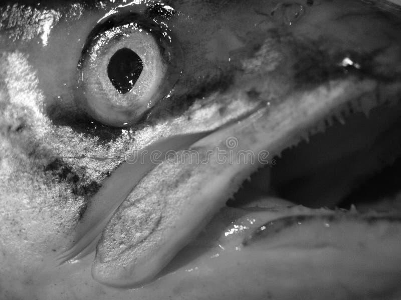 абстрактные рыбы Стоковые Фотографии RF