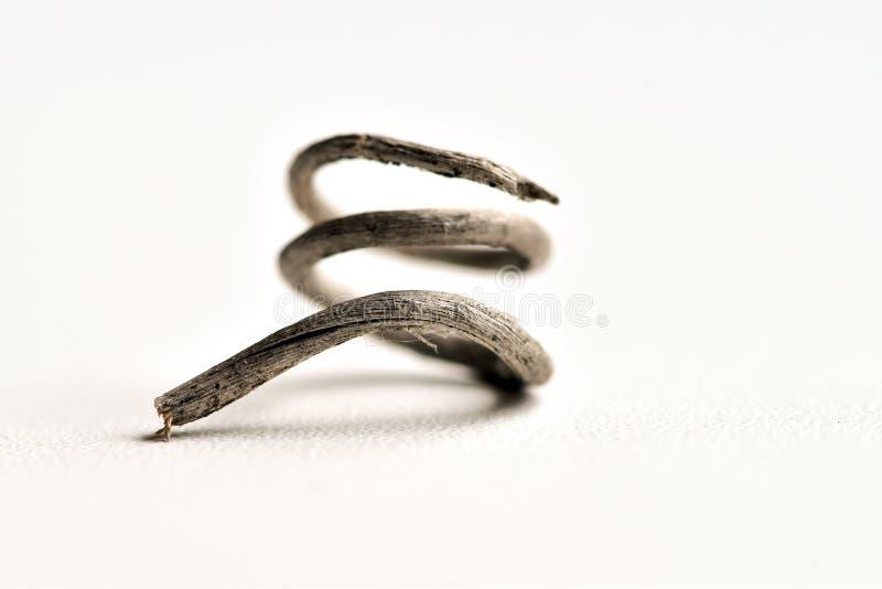 Абстрактные фотоснимки высушенного усика усиков завитых лозой лозы стоковое изображение rf