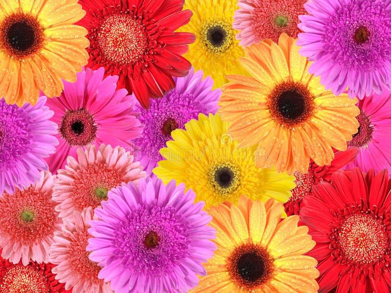 абстрактные цветки предпосылки стоковые изображения