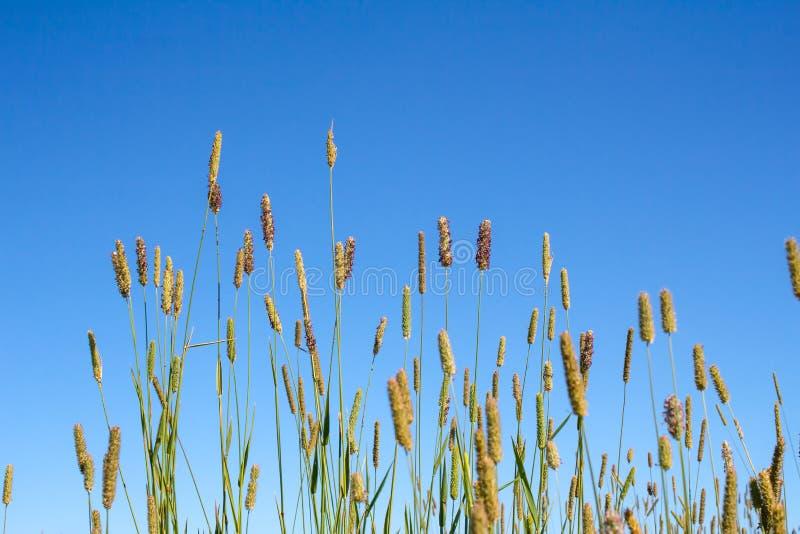 абстрактный вектор природы иллюстрации травы предпосылки стоковая фотография