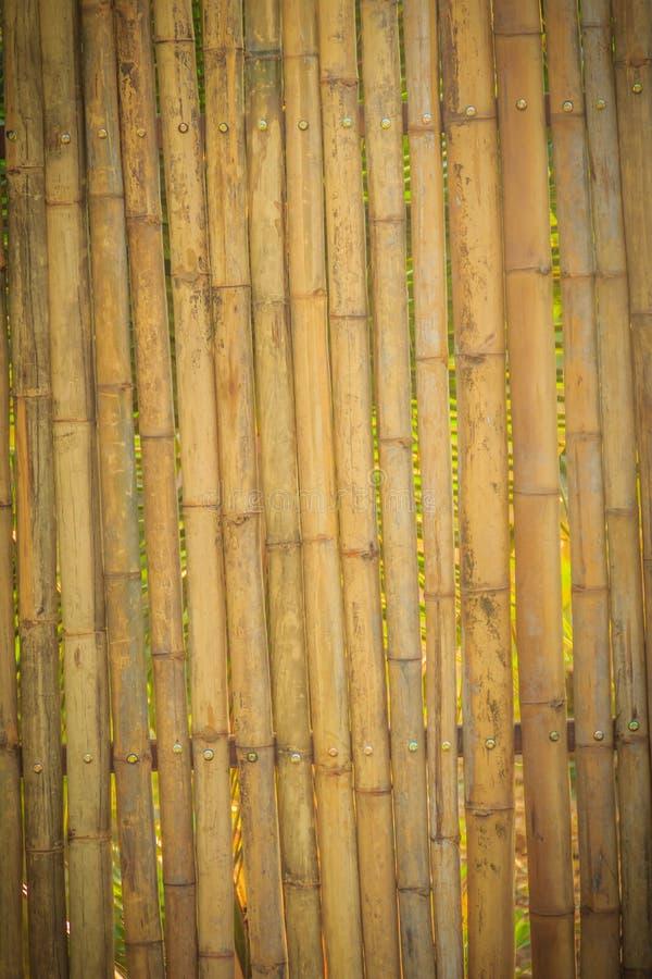 Абстрактный желтый цвет высушил бамбуковую текстуру загородки пограничной стены, бамбук стоковая фотография