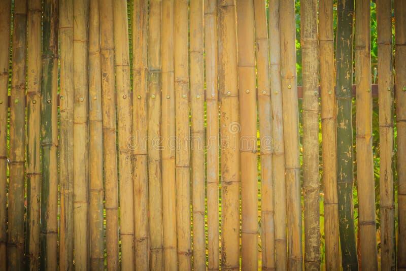 Абстрактный желтый цвет высушил бамбуковую текстуру загородки пограничной стены, бамбук стоковое фото