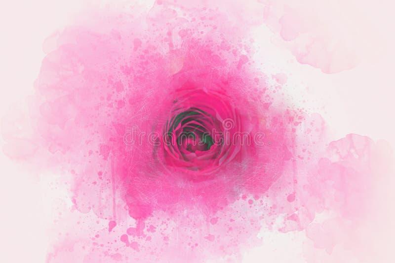 Абстрактный красивый цветок розы пинка на картине акварели иллюстрация вектора