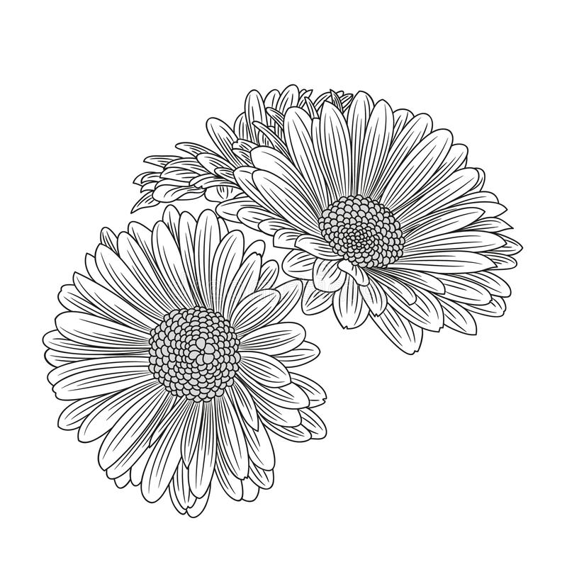 Абстрактный нарисованный вручную стоцвет цветка Элемент для конструкции также вектор иллюстрации притяжки corel стоковые изображения rf