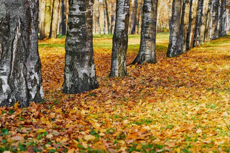 Абстрактный осенний пейзаж в парке стоковое фото