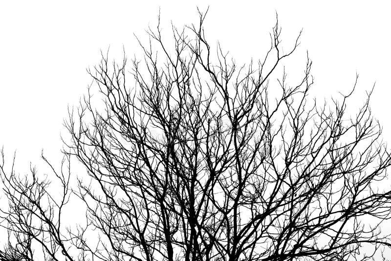 Абстрактный силуэт ветви мертвого дерева, изолированной на белой предпосылке стоковое фото