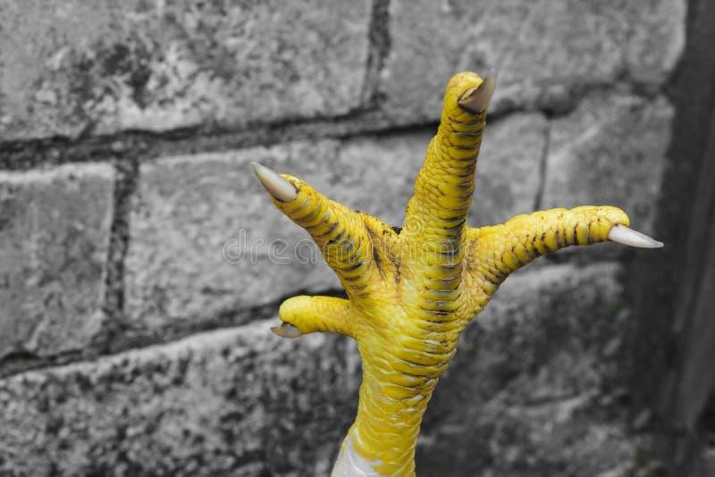 Абстрактный состав желтого когтя цыпленка перед серой предпосылкой кирпичей стоковое фото rf
