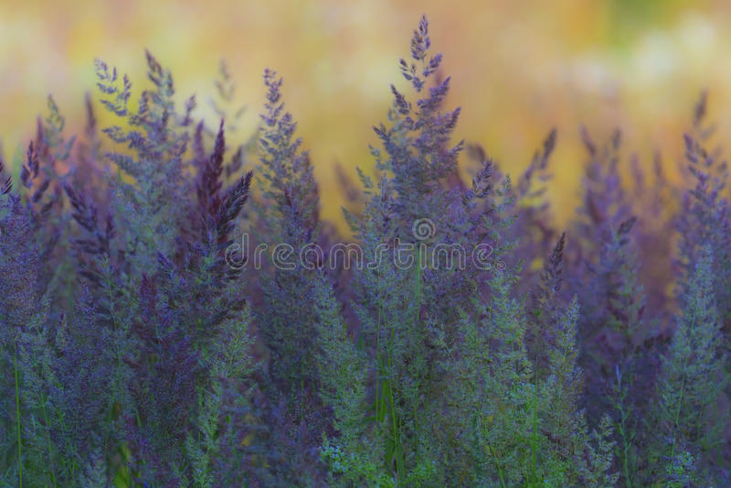Абстрактный состав с одичалой травой стоковые фото